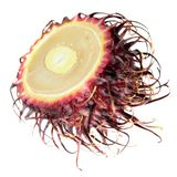 Rambutan fruit cut in half inside cross section isolated on white background Royalty Free Stock Photography