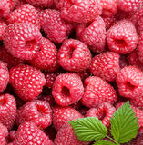 Ripe raspberries Stock Image