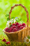 Ripe raspberries Royalty Free Stock Photography
