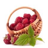 Ripe raspberries in basket Stock Images