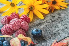 Ripe raspberries and blueberries with red beautiful autumn leaves. Close-up. copy space. The horizontal frame Stock Photos
