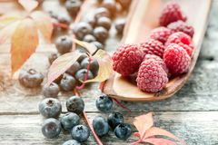 Ripe raspberries and blueberries with red beautiful autumn leaves. Close-up. Stock Images