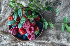 Ripe raspberries and blueberries with red beautiful autumn leaves. Close-up. Royalty Free Stock Photography