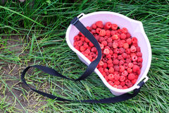Ripe raspberries in a bowl Stock Image