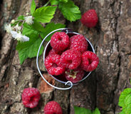 Ripe  raspberries in bucket Royalty Free Stock Photography