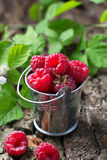 Ripe  raspberries in bucket. Selective focus Stock Photos