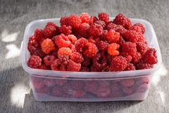 Ripe raspberries in a clear bowl Royalty Free Stock Photo