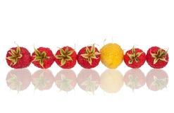 Ripe raspberries Stock Images