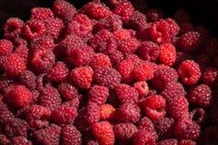 Ripe raspberries detail Stock Photography