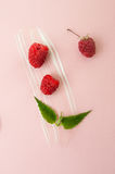 Ripe raspberries, green mint leaves and a smear of sour cream on Royalty Free Stock Image