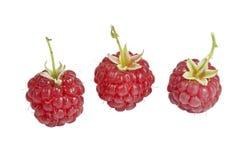Ripe raspberries isolated on white background Royalty Free Stock Photo