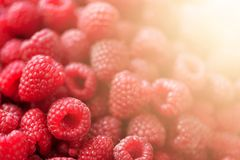 Ripe raspberries macro. Selective focus. Fruit background with copy space. Sunny summer and berries harvest concept stock photo