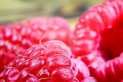 Ripe raspberries, macro shot, selective focus. Ripe raspberries macro shot, selective focus, fruit background Stock Image
