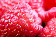 Ripe raspberries, macro shot, selective focus. Ripe raspberries macro shot, selective focus, fruit background Royalty Free Stock Photography