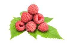 Ripe raspberries over a white background. Raspberries isolated on a white background with clipping path Stock Photos