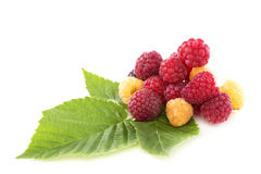 Ripe raspberries. Stock Photography