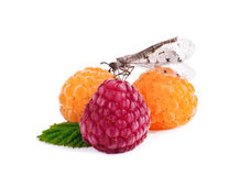 Ripe raspberries. Red and white raspberry isolated Stock Photos