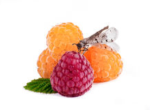 Ripe raspberries. Red and white raspberry isolated Royalty Free Stock Photos