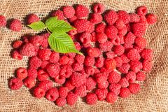 Ripe raspberries on sack fabric Stock Image