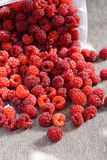 Ripe raspberries scattered on the table Stock Image