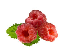 Ripe raspberries. Three red, ripe raspberry and green leaf stock photo