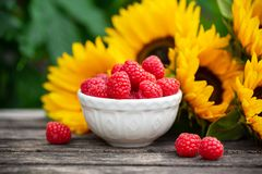 Ripe raspberries in white bowl with sunflower bouquet on wooden table, summer theme stock photography