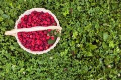 Ripe raspberries on wooden basket. On green grass Royalty Free Stock Photos