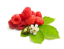 Ripe raspberry Stock Images