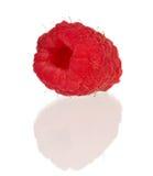 Ripe raspberry. Ripe fresh raspberry on white background close-up Royalty Free Stock Images