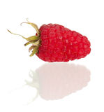 Ripe raspberry Stock Photos
