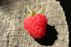 Ripe raspberry Royalty Free Stock Photos