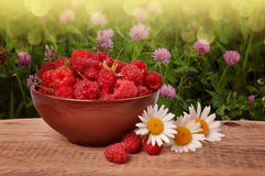 Ripe raspberry in a clay plate on a wooden table Royalty Free Stock Photography