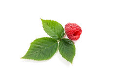 Ripe raspberry fruit with leaf isolated on white background. Close up view of fresh raspberry fruit with green leaf of raspberry bush isolated on white Royalty Free Stock Image