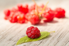 Ripe Raspberry Fruit On Leaf Royalty Free Stock Photography