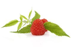 Ripe raspberry with green leaf. On white background Royalty Free Stock Image