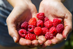 Ripe raspberry Royalty Free Stock Image