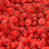 A ripe raspberry Stock Photography