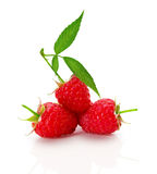 Ripe raspberry isolated on the white background Royalty Free Stock Image