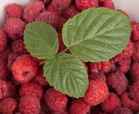 Ripe raspberry with leaf in a bowl Royalty Free Stock Photos