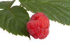 Ripe raspberry with leaf  isolated on a white background Royalty Free Stock Photography