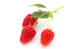 Ripe raspberry with leaf isolated on the white background. Fresh ripe raspberry with leaf isolated on the white background Royalty Free Stock Images