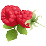 Ripe raspberry with leaf Stock Images