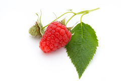 Ripe raspberry with leaf  on the white background. Fresh ripe raspberry with leaf  on the white background Royalty Free Stock Image