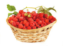 Ripe raspberry lies in a basket Royalty Free Stock Photography