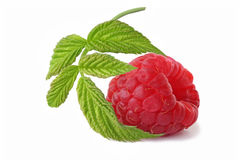 Ripe raspberry with twig   isolated on white Stock Photos
