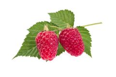 Ripe raspberry on white background close-up. The Ripe raspberry on white background close-up Stock Photo