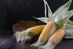 Ripe raw corn cob and green leaves. On dark wooden background Royalty Free Stock Photos