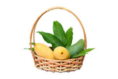 Ripe and raw mangoes with leaves in the basket isolated on white background Royalty Free Stock Photos