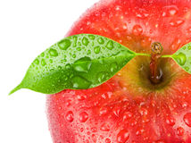 Ripe red apple Stock Image