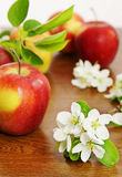 Ripe red apple fruits and apple flower on a wooden board Stock Photo